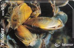NORWAY - Blue Mussel N207, 06/01, Tirage 50.000, Used - Norway
