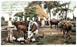 La Havane   CUBA  , Escena Campestre - Postcards