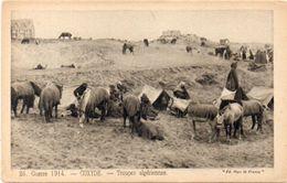 Guerre 1914 - COXIDE - Troupes Algériennes - Militaria     (101430) - Belgique