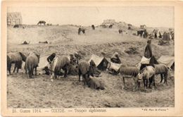 Guerre 1914 - COXIDE - Troupes Algériennes - Militaria     (101430) - Belgium