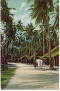 MALESIA PENANG NATIVE VILLAGE - Malesia