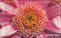 NORWAY - Rod Blomst Flower N240, 04/02, Tirage 75.000, Used - Norway