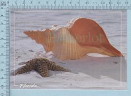 USA Florida -Colorfull Horse Conch On The Beach, Sea Shell-  Carte Postale Postcard - Non Classés