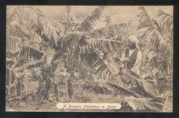 Brasil. Natal. *A Banana Plantation In Natal* Al Dorso Nº 305963. Nueva. - Natal
