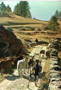Moutons Et Chevres Avec Berger En Transhumance 1981 CPM Ou CPSM - Animaux & Faune