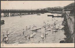 Swans, Weymouth, Dorset, 1904 - Tuck's Postcard - Weymouth