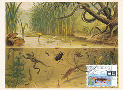 D32290 CARTE MAXIMUM CARD FD 2000 NETHERLANDS - FROG - SALAMANDER - DETAIL ON STAMP CP ORIGINAL - Turtles