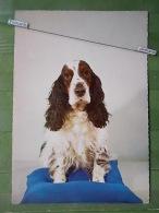 Kov 577 - DOG, HUND, CHIEN - Dogs