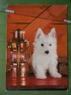 Kov 577 - DOG, HUND, CHIEN - Chiens