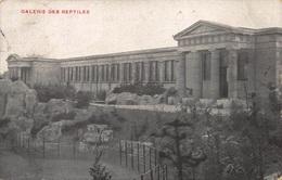 Antwerpen Anvers  Dierentuin Antwerpen Zoo Galerie Des Reptiles Reptielenverblijf    Fotokaart Anno 1911      X 3716 - Antwerpen