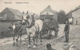 Ottenbourg ,Chaussée De Wavre,RARE ,attelage Vache+Cheval Tirant Un Chariot De Trèfle (Overijse,Grez-Doiceau,Huldenberg - Huldenberg