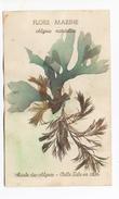 Algues Naturelles Flore Marine 1937- Musée Des Algues Belle Isle En Mer - Autres