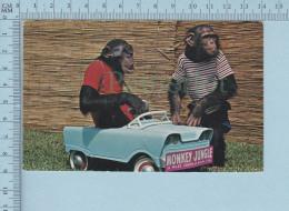 Floride - Monkey Car Driver, Singe Humanisé, Used In 1974 + Stamp  - Carte Postale PostCard - Animaux Habillés
