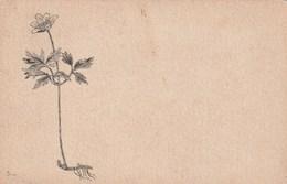 Carte Postale Ancienne Illustrée - Fleurs - Blumen