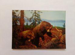 3d Lenticular Postcard Stereo Bears - Stereoscopische Kaarten