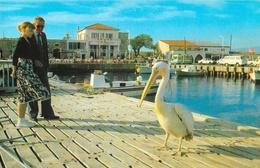 Chypre - Paphos Harbour, Cyprus - Pélican - Carte Non Circulée - Chypre