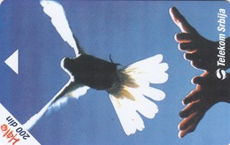 SERBIA - Day Of The Peace , 08/04, Sample No Chip And No Control Number - Yugoslavia