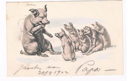 PIG-12 Pig-postcard - Pigs