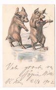 PIG-13 Pig-postcard - Pigs