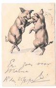 PIG-14   Pig-postcard - Pigs