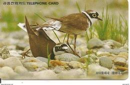 CARTE-MAGNETIQUE-COREE-OISEAUX PASSEREAU-TBE - Uccelli