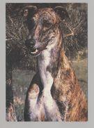 ANIMALS Pocket Calendar Greyhound 1994 RUSSIA Dogs Dog PLANETA № 202 - Formato Piccolo : 1991-00