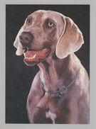 ANIMALS Pocket Calendar Weimaraner 1994 RUSSIA Dogs Dog PLANETA № 230 - Tamaño Pequeño : 1991-00