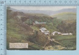 Ceylon -  Lesmastotte Tea Estate , Cover  Parry Sound 1908 Ont, Canada - Postcard Carte Postale - CPA - Sri Lanka (Ceylon)