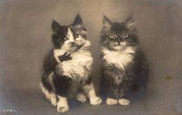 Cats -  Two Cats.    Rotary  RPPC. - Katzen