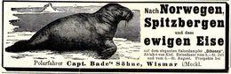 Original-Werbung/ Anzeige 1905 - NORWEGEN/ SPITZBERGEN / WALROSS/POLARFAHRER CAPT. BADE'S SÖHNE- WISMAR- Ca. 135 X 45 Mm - Werbung