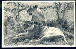 RA588 AFRICAN WILL LIFE - LION - Tanzania