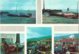 Faial Pico E Flores - Acores Esquartejamento Da Baleia - Cutting Up A Captured Whale - Açores