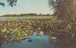 USA        293        Amana.Lotus In Bloom....... - Etats-Unis