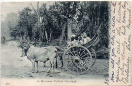 A. Burmese Bullock Carriage - Attelage     (101568) - Sri Lanka (Ceylon)