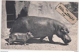 94 Parc Zoologique De Vincennes - Cpa / Hippopotames. - Hippopotames