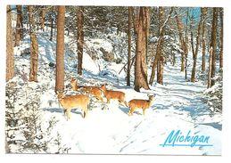 U.S.A. - MICHIGAN - Animaux Dans La Neige (A Perrin Print - DR-54475-8) - Etats-Unis