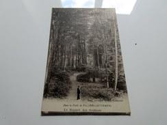 CPA - Dans La Forêt De VILLERS COTTERETS - Le Regard Des Sentines - Villers Cotterets