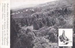 Postkarte :  Cronberg I Taunus  (Allemagne) Aufgenommen Durch Eine  Brieftaube Von Dr Neubronner Photographie Pigeon - Taunus