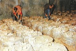 Champignonnières: Montsoreau: Cultures De Champignons - Cultures