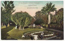 AUSTRALIA Adelaide Botanic Gardens Scene - Palm Trees - C1910 Vintage Postcard M8997 - Adelaide