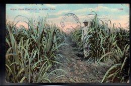 ANTILLES - PUERTO RICO - Sugar Cane Plantation In Porto Rico - Puerto Rico