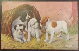 CPA Fantaisie - 4 Chiots Dans Un Panier - Carte Couleur Numérotée 360/1760 - Circulée - Dogs