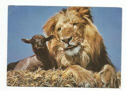 Carte Fantaisie Lion - Lions