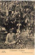 Un Cacaoyer   (101605) - Dahomey