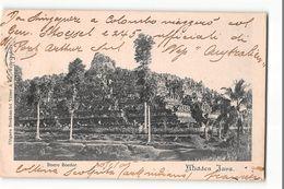 16242 MIDDEN JAVA - Indonésie
