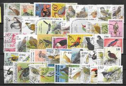 L915 - Colecciones & Series
