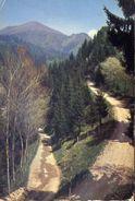 Bossico - Bergamo - Passeggiata In Pinete - 1627 - Formato Grande Viaggiata – E 4 - Bergamo