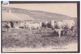 TROUPEAU DE VACHES DANS LE JURA - TB - Suisse