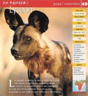 Lycaon Mammifères Fiche Illustrée Documentée - Animals