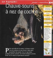 Chauve Souris à Nez De Cochon Mammifères Fiche Illustrée Documentée - Animaux